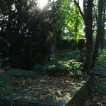 Alter Neustaedter Friedhof Celle (3)