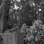 Friedhof Engesohde (76)