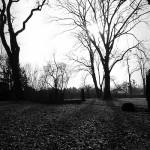 Friedhof Lindener Berg (11)
