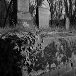 Friedhof Lindener Berg (12)