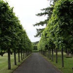 Friedhof Seelhorst 086