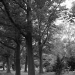 Friedhof Seelhorst 090