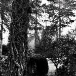 Friedhof Stöcken (105)