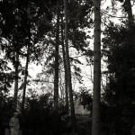 Friedhof Stöcken (3)