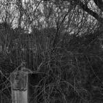 Friedhof Stöcken (30)