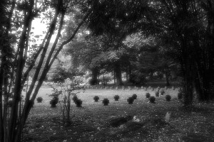 Friedhof Wehl (82)