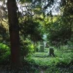 Friedhof_Zuerich_Sihlfeld (15)