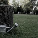 Friedhof_Zuerich_Sihlfeld (23)