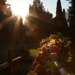 Friedhof_Zuerich_Sihlfeld (27)