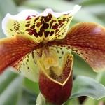 Hennis_Orchideen_111
