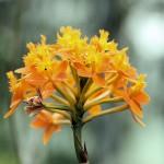 Hennis_Orchideen_112