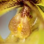 Hennis_Orchideen_202