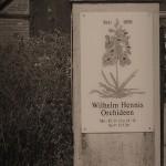 Hennis_Orchideen_345